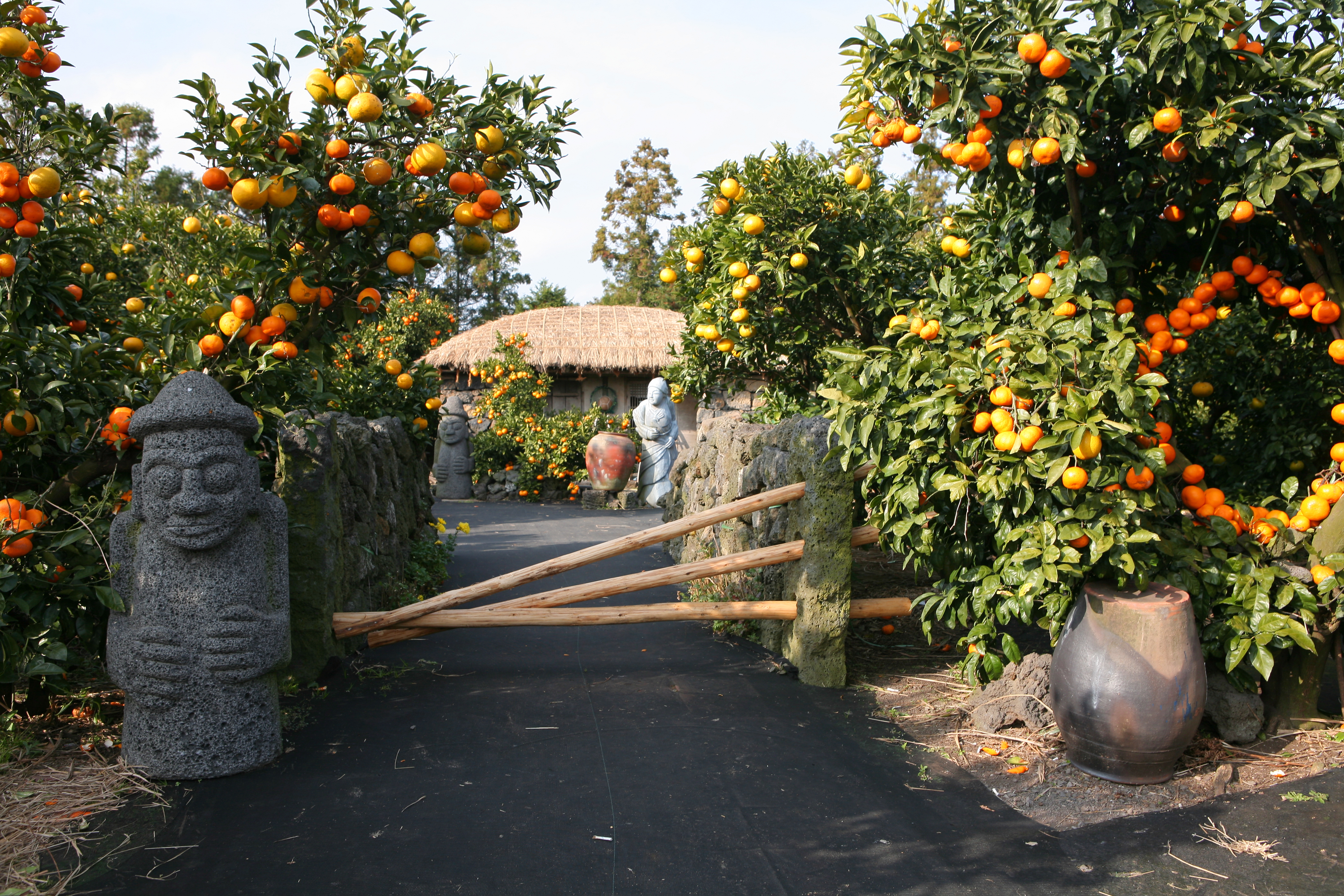 제주초가와밀감나무.jpg
