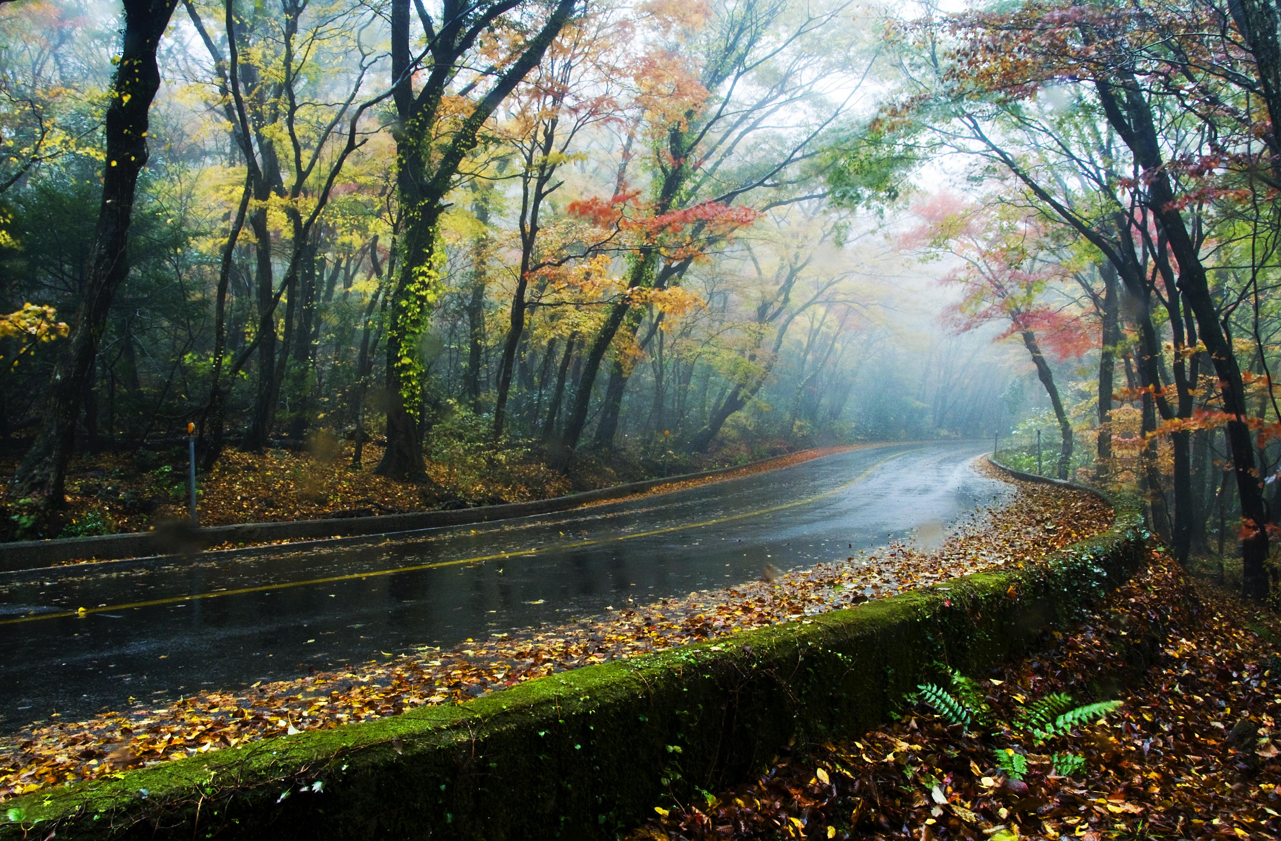 한라산숲터널.jpg