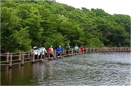 Walking Trail on Lake, Jeju.jpg